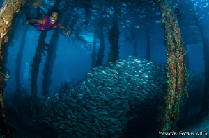 Aborak Jetty boy showing a school of fish by Henrik Gram Rasmussen 
